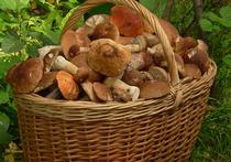 Москвичи могут досрочно полакомиться блюдами из свежесобранных маслят и подберезовиков
