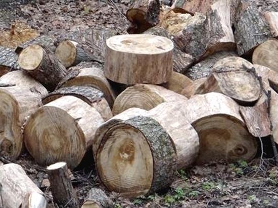 В парке «Динамо» нужно срубить около 200 сухих деревьев