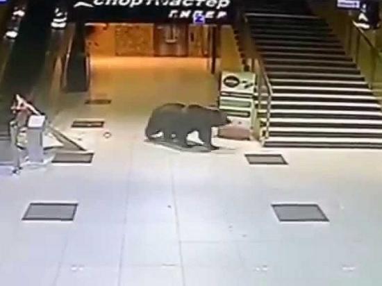 Специалисты прогнозируют выход медведей в населенные пункты Хабаровского края