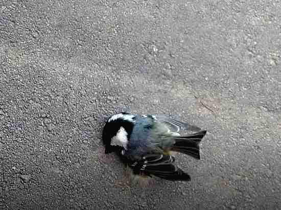 Случаи массовой гибели птиц участились в Хабаровске