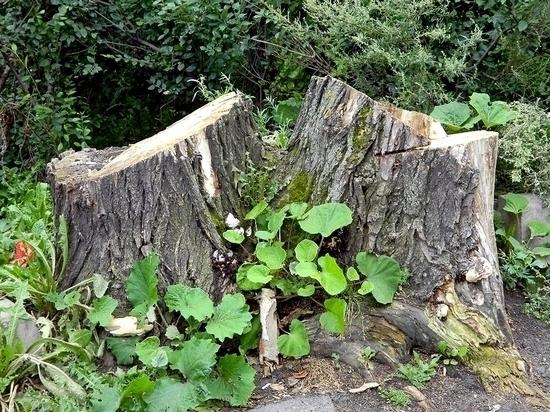 ВЖиздринском лесничестве нелегально вырубили деревья на37 тыс.