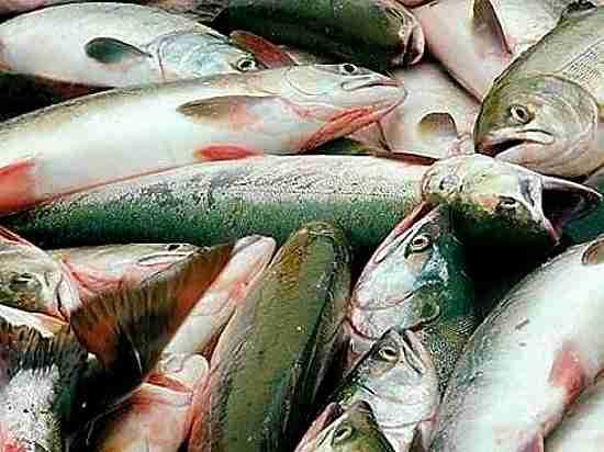 Цены на рыбу растут в Хабаровском крае
